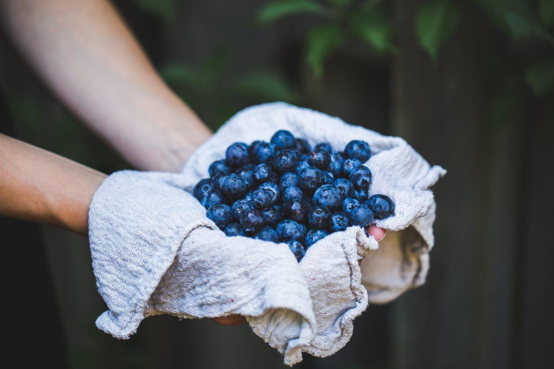 Blaubeeren- Heimische Superfoods