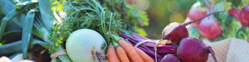 Nachhaltiges Ernährungscoaching